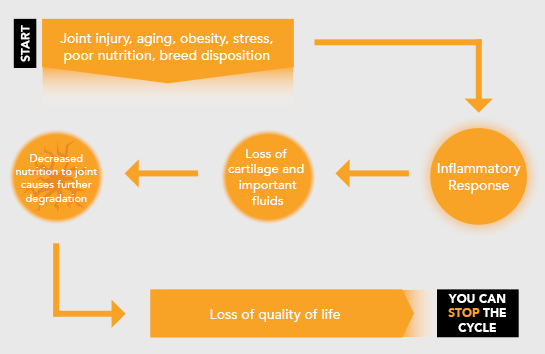Diagram illustrating the cycle of joint problems: starting with injury, breed disposition, and other risk factors, proceeding to an inflammatory response and loss of cartilage and important fluids. Decreased nutrition to the joint causes further degradation. This leads to a loss of quality of life - but you can stop the cycle.